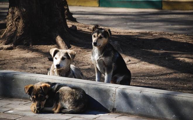 Ритуальные услуги для животных в Хабаровске: где похоронить питомца