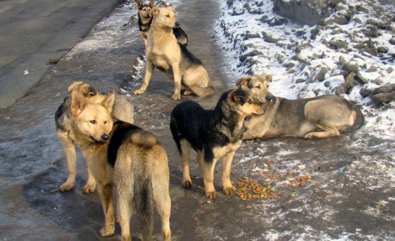 Отлов бродячих собак в Хабаровске не интересует ни предпринимателей, ни зоозащитников