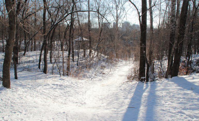 Большая чистка: в парке «Динамо» в феврале приступят к вырубке деревьев