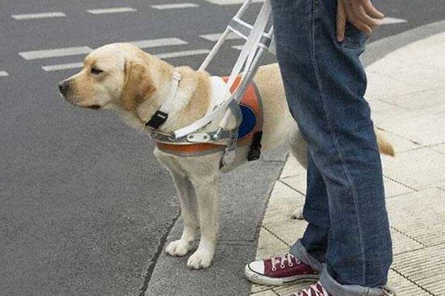 Изменились правила компенсации на содержание собак-поводырей для инвалидов по зрению