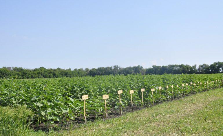 Новые сорта сельскохозяйственных культур подготовили в Хабаровском крае