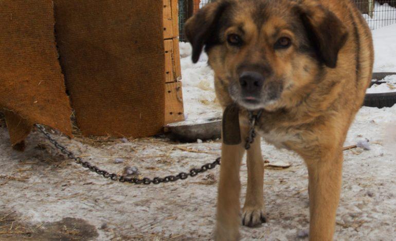 Животные из приюта хабаровчанки Екатерины Личко могут вновь оказаться на улице