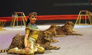 Волшебное шоу «Город Чудес» с 24 марта в цирке