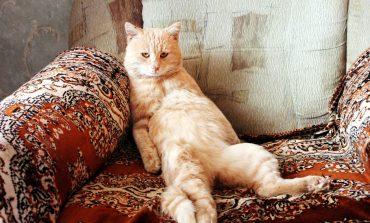 Пятничные котики хабаровчан: подборка от habinfo.ru (ФОТО)