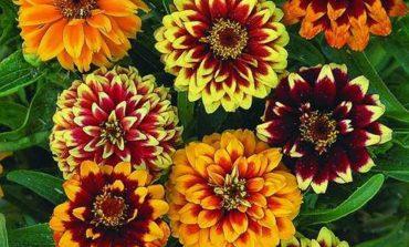 Как вырастить цветочный рай