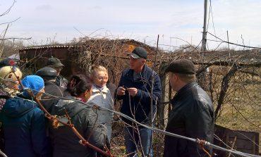 Мастер-класс по прививке плодовых деревьев от Олега Михайличенко