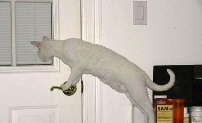 Интеллект кошки зависит от любви и заботы хозяев