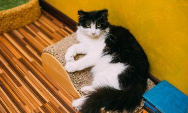 Пятничные котики хабаровчан: подборка от habinfo.ru