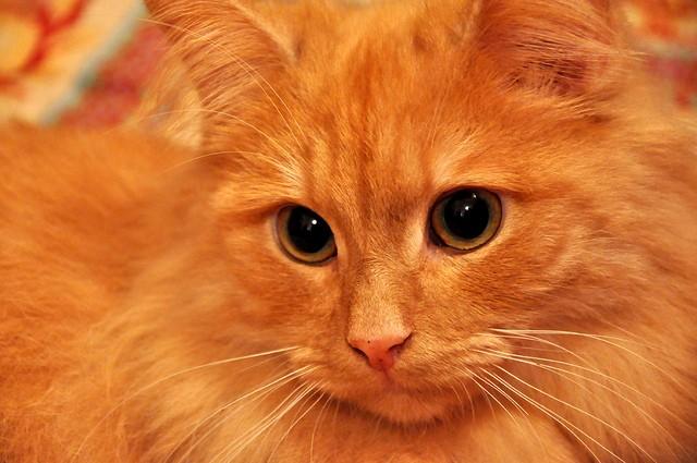 Рыжий Кузя оказался заботливым котом