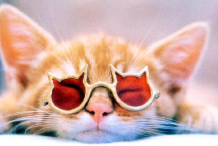 День заплетальщиц и солнцезащитных очков