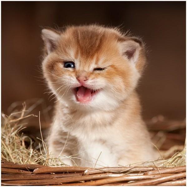22 июня: День подмигивания кошкам и день лоботрясов