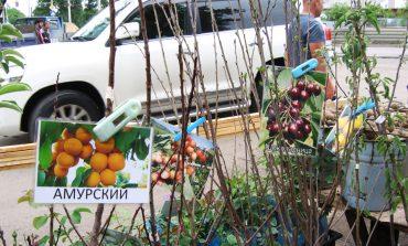 Выбираем саженцы: как не купить березу вместо яблони