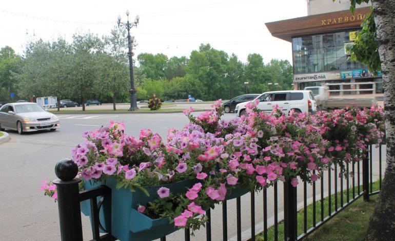 Городские цветы: хабаровчане разоряют клумбы
