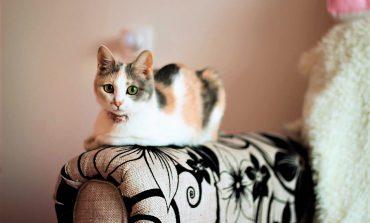 Кот-посудомойщик и грациозная Наоми