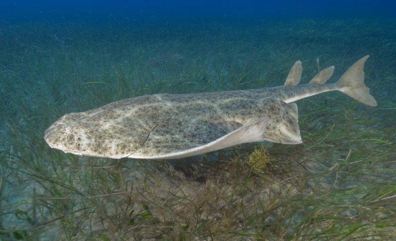 С какими акулами в Японском море могут встретиться отдыхающие