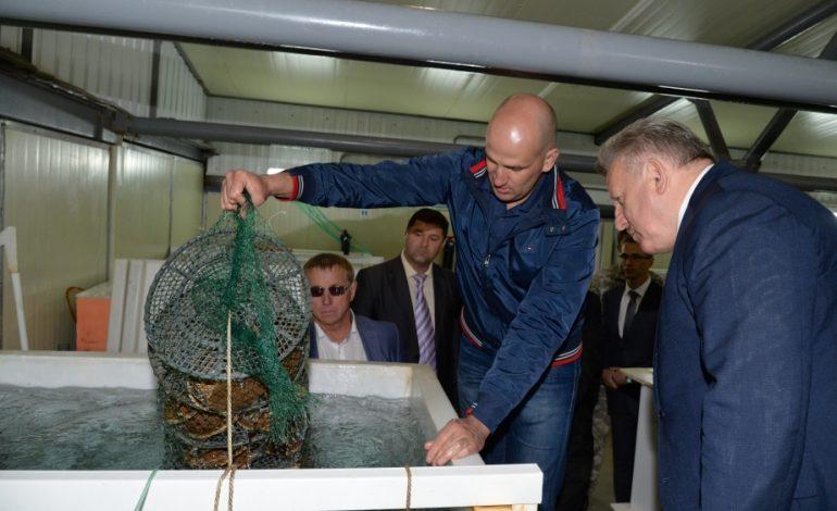 Совгаванский гребешок должен появиться в Хабаровске к новому году