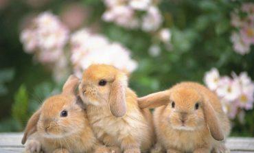 Бизнес на гектаре: хабаровчанам предлагают организовать кроличью ферму