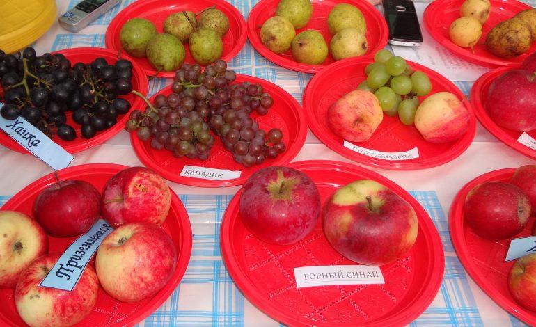Внимание! 25 августа состоится выставка плодовых культур