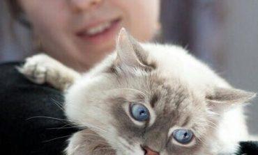 Кот-пикапер и пушистый повелитель мира