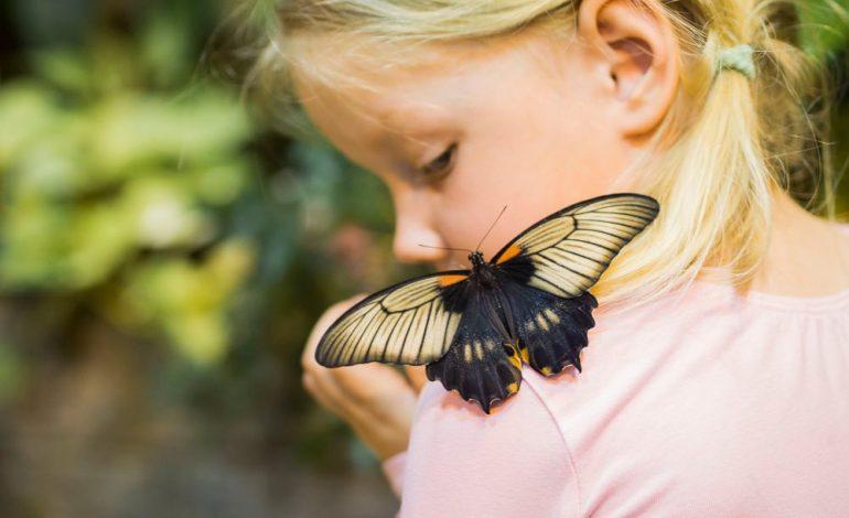 Порхающая красота: выставка живых бабочек продолжается в Хабаровске