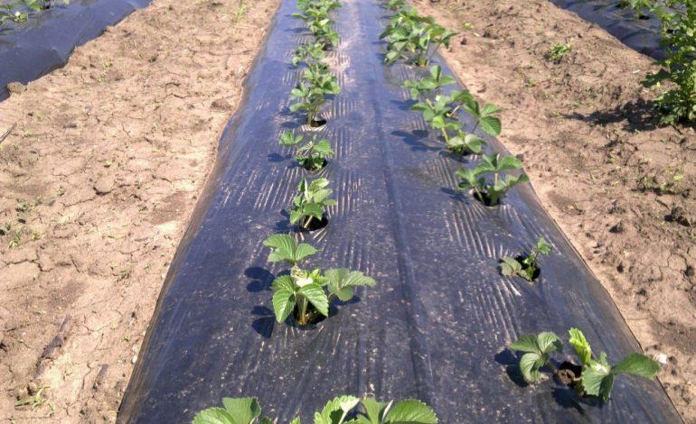черная пленка от сорняков фото