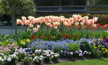 Цветник букетный – секреты постоянного цветения