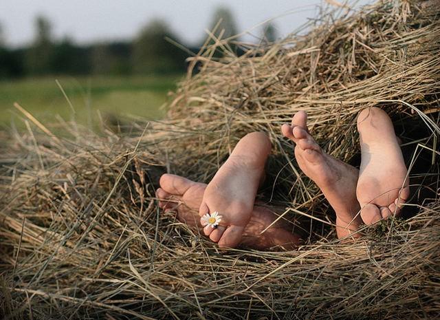 День валаяния в сене