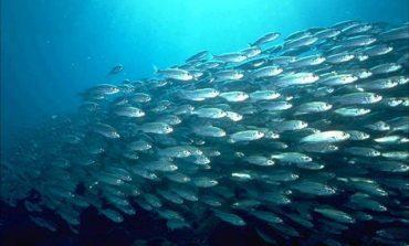 Бизнес на гектаре: рыбная ферма