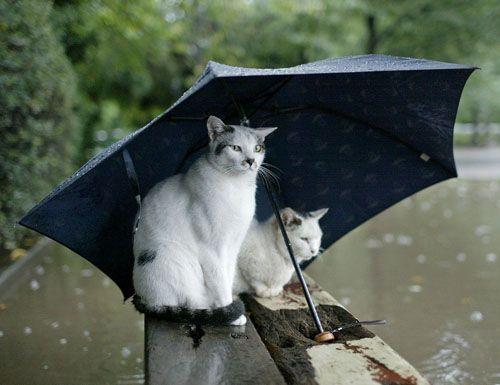 День поедания шаурмы и Праздник тринадцатой кошки