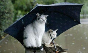 Погода на выходные: дождливый уикенд ждет хабаровчан