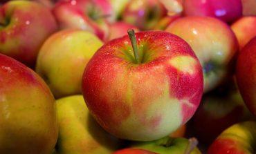 Афиша на выходные 19 и 20 августа: Яблочный спас, роботы и спорт