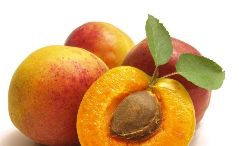Как долго сохраняют всхожесть семена абрикоса