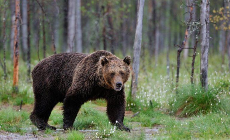 Косолапая угроза: в Хабаровске готовы к нашествию медведей