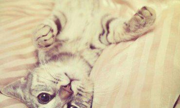 Ждущие выходных пушистики и коты-массажисты
