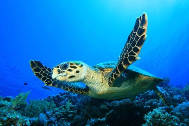 День выгула черепахи