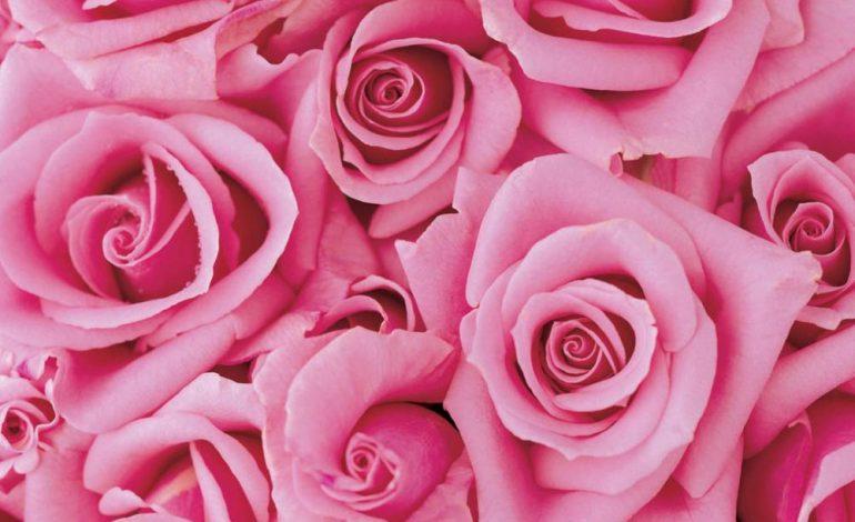 Все девочки любят розовое – что говорит цвет о своих поклонницах