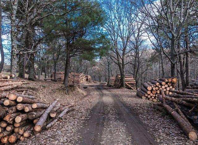 Бизнес на гектаре: лесопилка