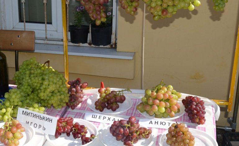В дачном магазине прошла выставка плодовых культур