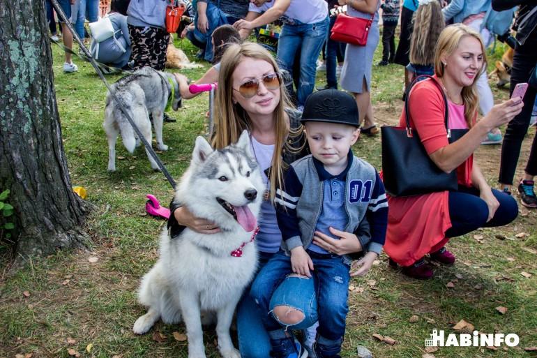 Хабаровчане наобнимали собак на 70 тысяч рублей