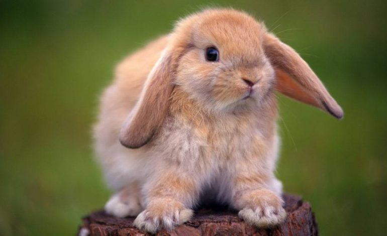 День рождение Google и Международный день кролика