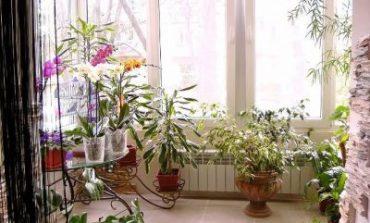Комнатный сад создает уют, но и ему нужно соответствующее оформление