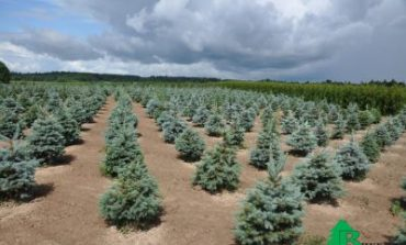 Бизнес на гектаре: питомник растений