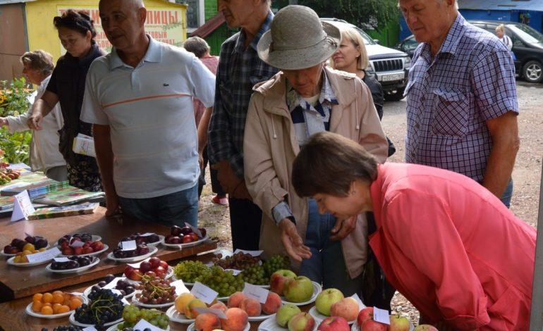 Хабаровские дачники продолжают демонстрировать свой урожай