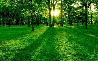 Полюбите зеленый – цвет самой жизни