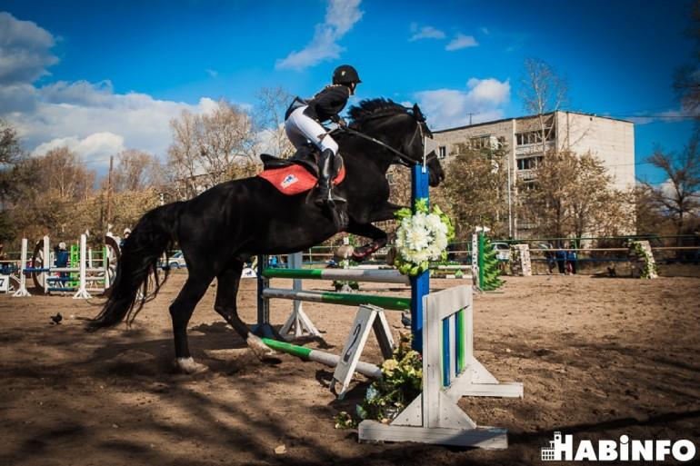 конный спорт хабаровск фото