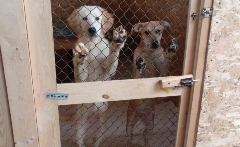 Приют для бездомных животных в Хабаровске опять ищет дом