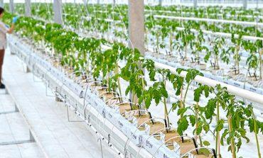 Будем есть редис и салат: в Хабаровске запустили вторую очередь тепличного комплекса