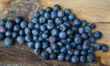 Бизнес на гектаре: выращивание голубики