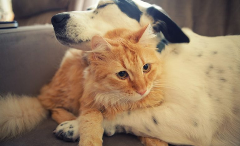 Всемирный день защиты животных и День опустошения холодильника