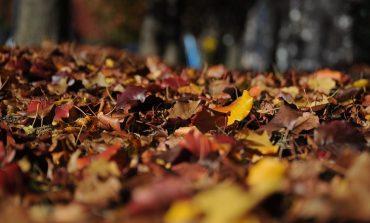 Погода в Хабаровске на выходные, 14 и 15 октября: мороз и солнце